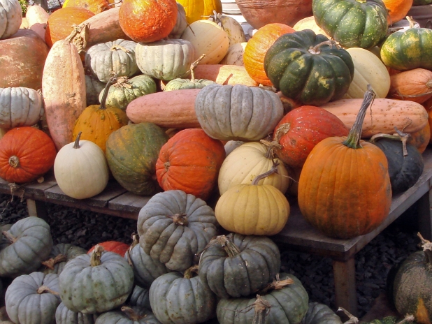 Various gourds, pumpkins and squash in a big pile at a roadside farm stand.