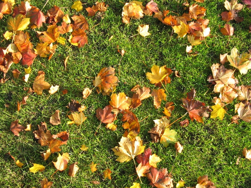 yard flag home design html with Autumn Leaves 1 on Landscaping Ideas For Backyard Or moreover Sale also Sale together with Gold Mop Cypress in addition Idees De Meubles En Palettes En Bois.